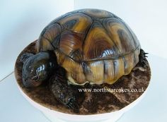 Realistic Turtle Cake - North Star Cakes - Fan Share with PartyAnimalOnline Africa Cake, Cupcake Torte, Cake Decorating Equipment, Reptile Party, Animal Cupcakes, Spring Cake, Star Cakes, Turtle Birthday, Novelty Cakes