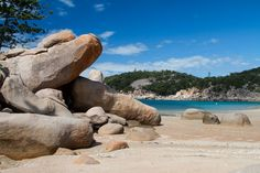 Magnetic Island (or Maggie if you're a local) is home to a stunning array of native wildlife such as Lorikeets, Sea Eagles, Sunbirds, Brahmini Kites, Curlews, Cockatoos, Rock Wallabies and Koalas, all co-existing in their natural habitat.