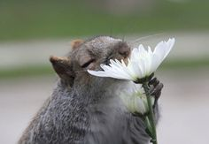 Animals that can not get enough of the scent of flowers. It's the cutest thing in the world!