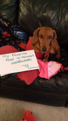 dog shaming... This is my Sophie for sure