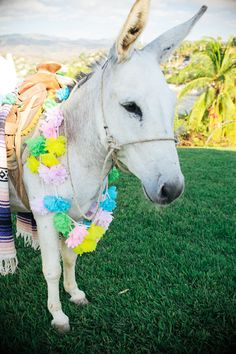 Riding in on a pretty donkey? Genius | Sayulita Wedding from Captured by Aimee  Read more - http://www.stylemepretty.com/destination-weddings/2013/08/22/sayulita-wedding-from-captured-by-aimee/