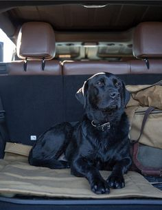 Filson-AEV-Field-Guide-WA-DuckHunt-29 by paulandwilliams on Flickr. Camping with my four legged friend