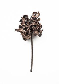 whatiseewhenirun:  Knot ( Acacia Auriculiformis )