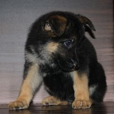 k-9 dogs | Posted on Jun 30, 2010