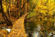 A leaf covered path at the Plitvice Lakes in Croatia.