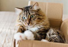 Animal Shelter Writes Badass Adoption Memo For 'Utter Bastard Of A Cat' Schrodingers Cat, National Cat Day, Tiny Kitten, Outdoor Cats, Feral Cats, Cat Behavior, Cat Sleeping, Cat Facts, Cat Sitting