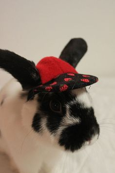 OH MY GOODNESS! These rabbits are in HATS! I am going to die. ♥♥♥ Strawberry print and fleece hat for your bunny by turvytopsy Bunny Room, Beautiful Rabbit, Gussied Up, Bunny Rabbit, Guinea Pigs, Rabbits, Bunnies, Mad, Strawberry