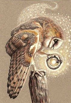 The Little Seer by on DeviantArt - The Little Seer by Owl Familiar monster beast creature animal Lechuza Tattoo, Buho Tattoo, Tattoo Owl, Owl Artwork, Beast Creature, Owl Pictures, Owl Photos, Beautiful Owl, Animal Totems