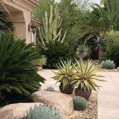Beautiful low-maintenance front entry yard of cactus, agaves, palms and cycads. - Beautiful low-maintenance front entry yard of cactus, agaves, palms and cycads. Source by - Succulent Landscaping, Modern Landscaping, Landscaping Plants, Front Yard Landscaping, Succulents Garden, Landscaping Ideas, Agaves, Landscape Design, Garden Design