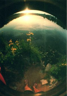summer through fisheye