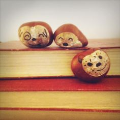 chestnut faces