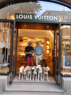 Talk about good taste - a gaggle of whippets at Louis Vuitton
