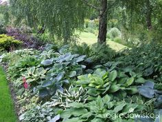 Kolorowy ogród na piasku - strona 510 - Forum ogrodnicze - Ogrodowisko Monteverde, Shades, Vegetables, Plants, Beautiful Gardens, Gardening, Summer, Projects, Shadows