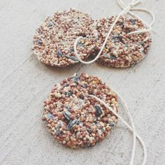 Birdseed Bird Feeder Ornaments - for kids to make at Wildlife Weekend then hang on the trail