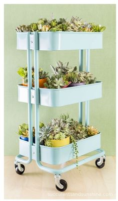 DIY succulent garden made from an old bar cart