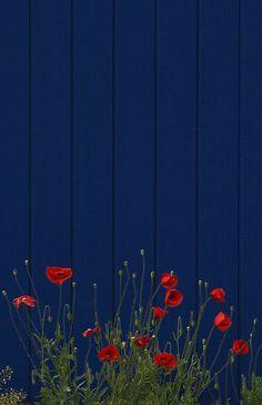 Blue fence idea and flower garden design