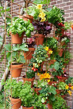 Balcony Herb Gardens, Small Balcony Garden, Balcony Flowers, Small Balcony Decor, Balcony Plants, Small Space Gardening, Balcony Gardening, Urban Gardening, Apartment Vegetable Garden
