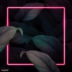 Square pink neon frame on tropical leaves background vector | premium image by rawpixel.com / manotang Pink Neon Wallpaper, Framed Wallpaper, Flower Phone Wallpaper, Graphic Wallpaper, Pink Glitter Background, Leaf Background, Background Patterns, Neon Backgrounds, Wallpaper Backgrounds
