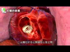 認識心臟組織與功能