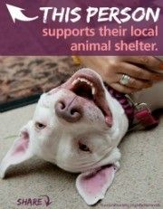 National Animal Shelter and Rescue Appreciation Week Nov. – Pibbles & More Animal Rescue Animal Shelter, Animal Rescue, National Animal, Local Shelters, Dog Daycare, Good Cause, Dogs Of The World, Humane Society, Beautiful Dogs