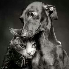 You thinking the same my catdarling? Oh yes always , you know my Hero !