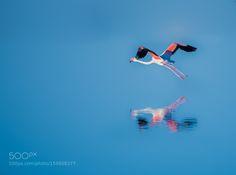 fly low by sirbio75 #animals #animal #pet #pets #animales #animallovers #photooftheday #amazing #picoftheday