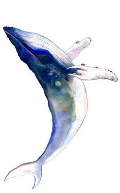 1000 Zeichnungen – von Victor Abarca – – New Watercolor Animals, Watercolor Paintings, Watercolor Tattoos, Watercolor Whale, Watercolours, Painting Inspiration, Art Inspo, Whale Tattoos, Whale Art