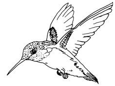 Hummingbird Coloring Pages Fascinating Printable Color Picture Hummingbird  Texas Ruby Throated .