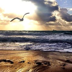 That's our seagull (3/21/12). Courtesy of http://twitter.com/ftlauderdalesun