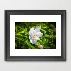 White Flowers Framed Art Print by 76spots - $34.00