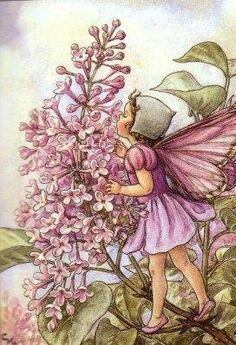 Fairy  by: Cicely Mary Barker