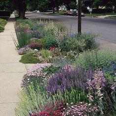 A reborn parking strip Sidewalk Landscaping, Front Yard Landscaping, Landscaping Ideas, Patio Ideas, Front Gardens, Small Gardens, Flower Landscape, Landscape Design, Verge