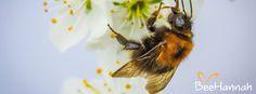 """""""Wenn die Biene stirbt, stirbt der Mensch"""", sagte schon Albert Einstein."""