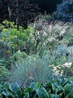 A Guide to Ornamental Garden Grasses