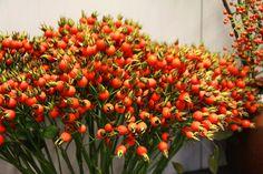 Bloemen in herfstkle