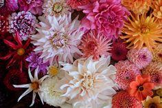 Dahlias and chrysanthemums - TownandCountrymag.com