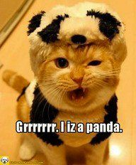 Kitty iz a panda!