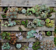 Herb Garden Ideas Pallet Herb Garden Is The Solution For Limited Space