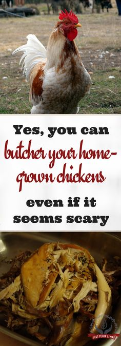 Whether you're living on a large property in the country or a small suburban block, you can usually find room for a few chickens, they are cheap to feed and they are relatively small and easy to butcher.