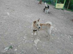 Juegos en el parque canino 10/16 Brown