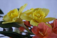 Making Sugar Flowers: Daffodils - CakesDecor