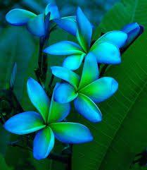 Afbeeldingsresultaat voor beautiful flowers