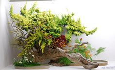 Huge branch forming an ikenobo arrangement resembling a forest landscape