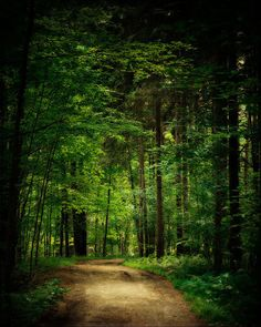 Emerald Green Forest Woodland path Magical by LisaRussoPhotography,