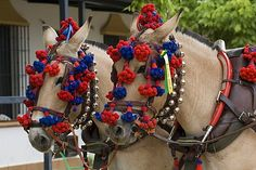 Horses decorated for a Pentecost pilgrimage in El Rocio, Andalusia, Spain, Europe, http://www.robertharding.com/preview/832-342864/horses-decorated-pentecost-pilgrimage-el-rocio-andalusia-spain/