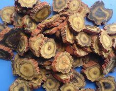 Salvia miltiorrhiza seeds Red Sage Herb Medicinal Herbal | ZHONG ...