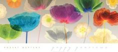 Poppy Panorama art poster at ArtPosters.com