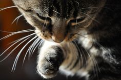 5 Easy Hairball Remedies For Your Cat ... #pets #cat... PetsLady.com