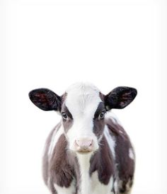 Baby cow print Farm animal prints Baby animal prints The Crown Prints Nursery wall decor Animal art Baby room wall art Calf print Cute Baby Animals, Farm Animals, Animals And Pets, Nature Animals, Tier Wallpaper, Animal Wallpaper, Amazing Animals, Animals Beautiful, Cow Decor