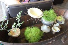 광릉수목원카페 포천카페 도자기예쁜 가삼도예카페 : 네이버 블로그 Plants, Flora, Plant, Planting